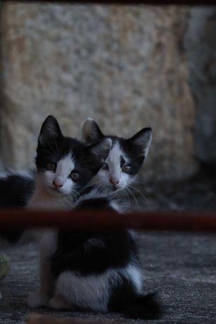 Gatos para adoção (Viseu)