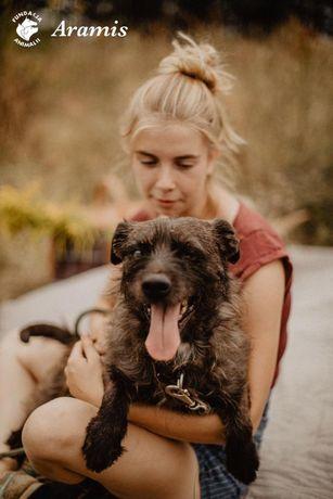 Aramis cudowny psiak szuka domu