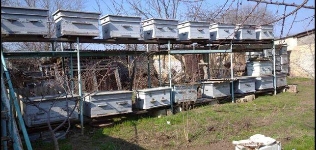 улья для пчел есть много уликов