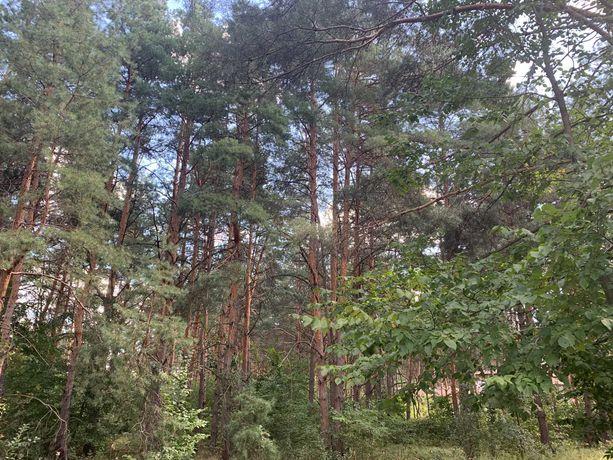 Участок в сосновом лесу