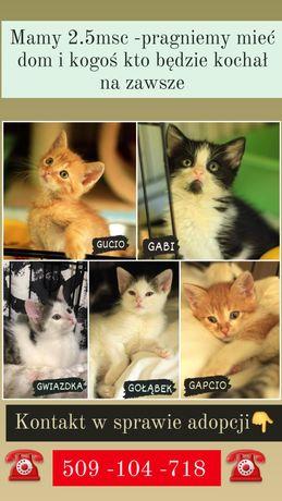 Kociaczki do adopcji