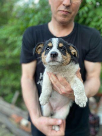 Отдаются красивые щеночки в хорошие и добрые руки .