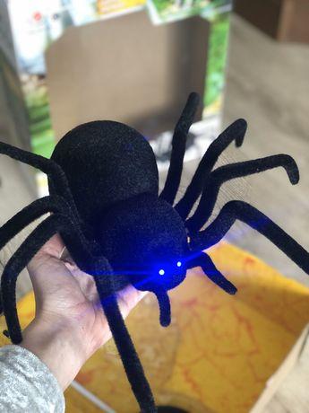 Паук Павук Чорна вдова
