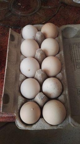 Jajka świeże wiejskie rozmiar L. Dowóz każdej ilości!