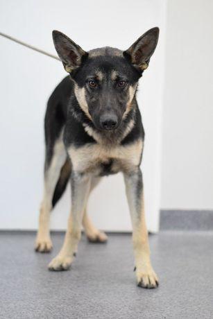 Olsztyn / Turów znaleziono psa! Szukamy właściciela!