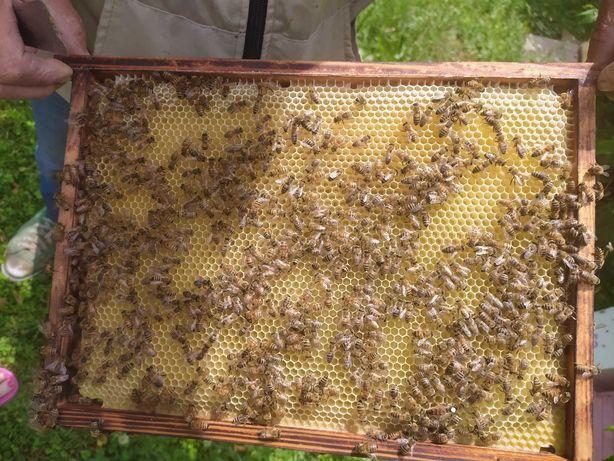 Odkłady pszczele 5-ramkowe, ramka wielkopolska, Wojnicz, Cena: 250 zł