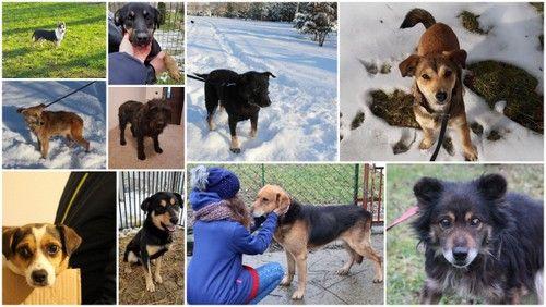 Pieski ze schroniska szukają domów adopcyjnych
