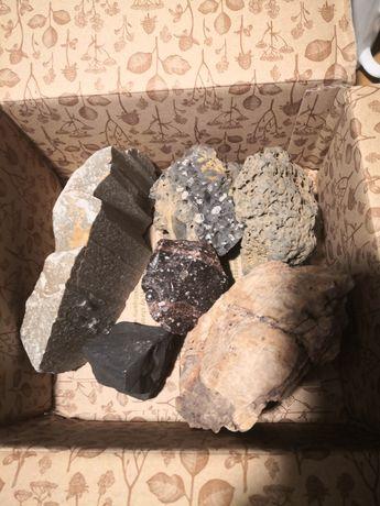Skamieniałe drewni oraz skały do akwarium turbo zestaw