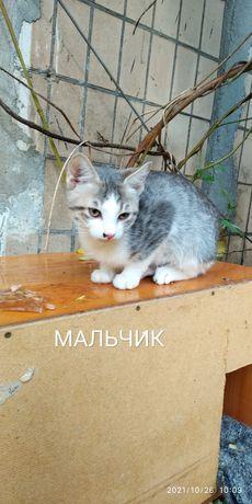 Котята котёнок кот кошка