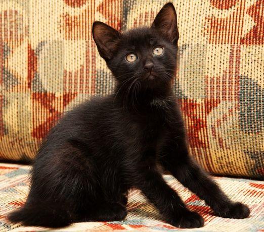 Очаровательный черный котенок