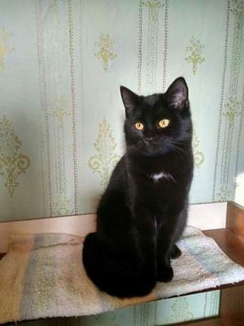 Отдам черного котенка,девочка,5 месяцев