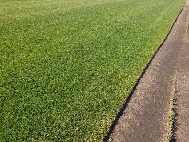 Trawa w rolce, trawnik, trawniki