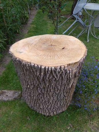 kloc jesiona, drewno