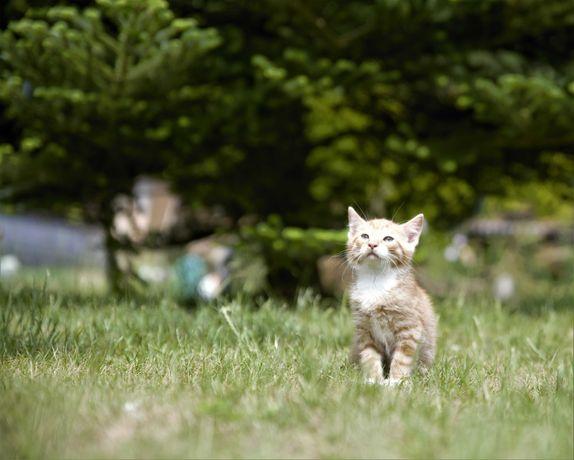 Oddam piękne, rude kocięta...