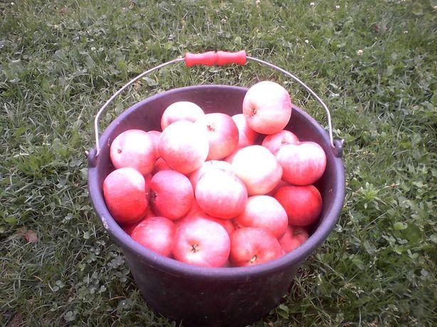 Jabłka na soki. Śliwka Węgierka i gruszka
