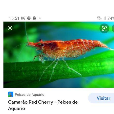 Camarões de água doce