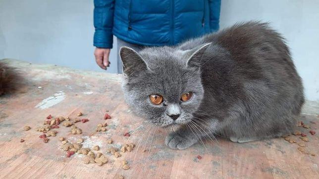 Знайдена кішка або кіт! Вул. Князів Коріатовичів (Свердлова)!