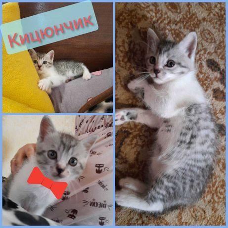 Чудові котинки для люблячої родинки :)