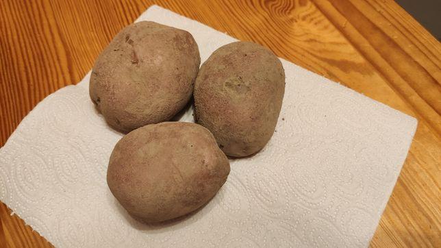 Ziemniaki jadalne Red Lady