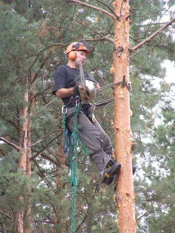 Wycinka, Ścinka, Ścinanie, Przycinanie, Obcinanie drzew apinistycznie