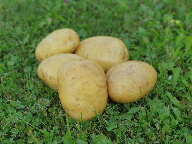 Ziemniak żółty smaczny 25kg Korczyna Krosno dowóz w cenie 0.80zł/kg