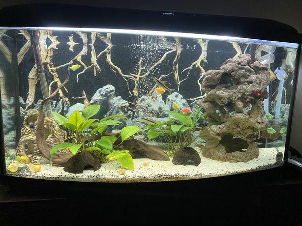 Аквариум,аквариум с рыбками,фильтр