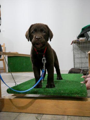 Szkolenie psów, przedszkole dla szczeniąt Tychy