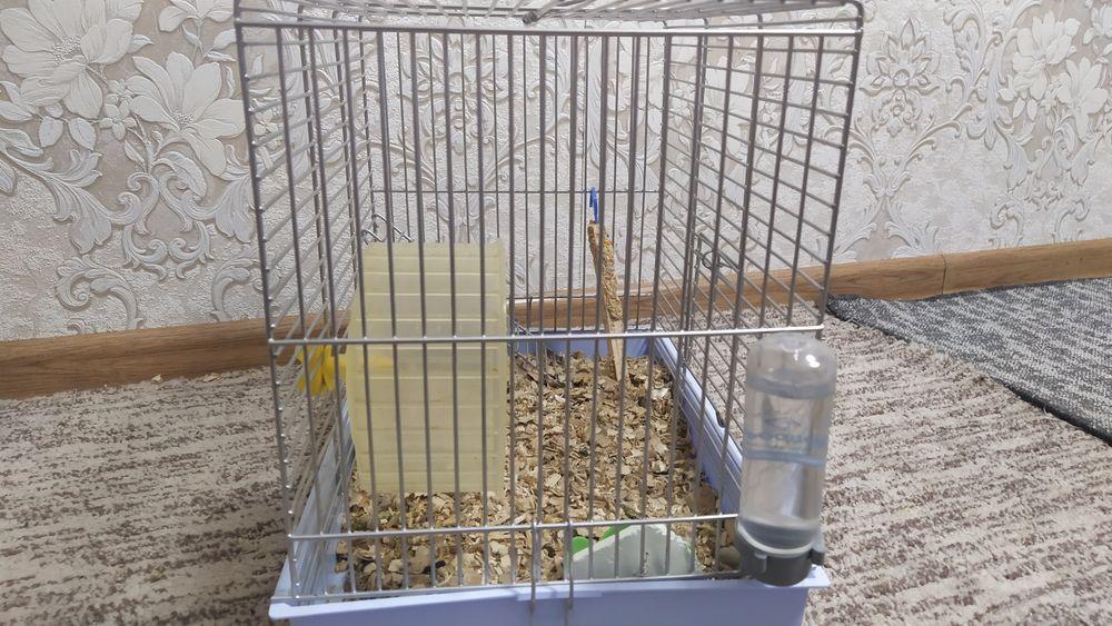Клетка для хомяка Херсон - изображение 1