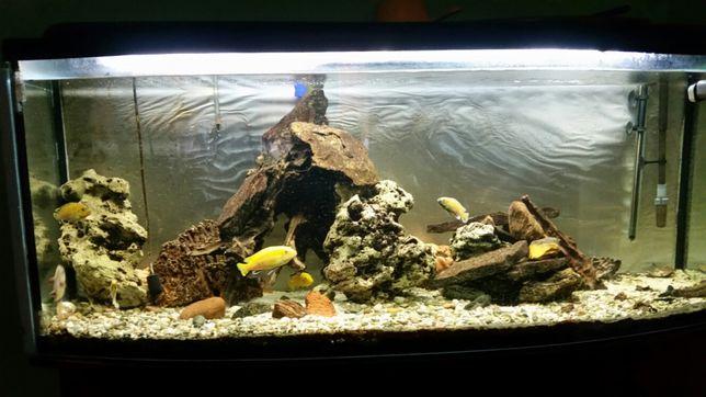 Akwarium 400l z panoramiczną szybą