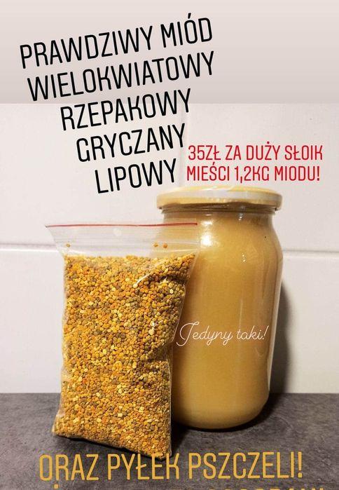 Miody Sosnowiec - image 1