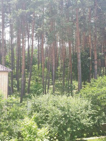 Участок 20 км от Киева, рядом лес