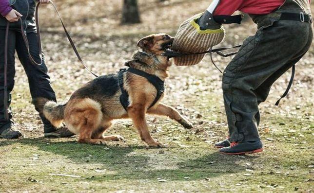Кинолог для собак