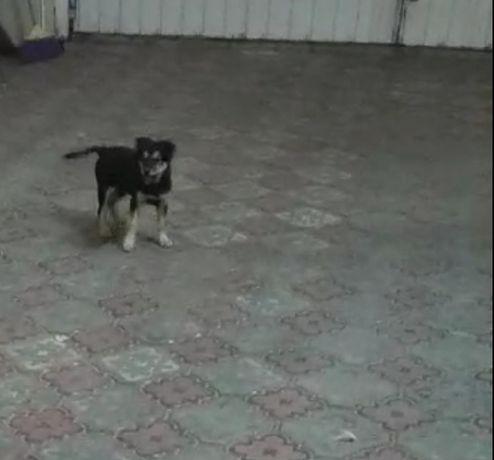 Пропала собака, помогите пожалуйста найти, может кто-то видел