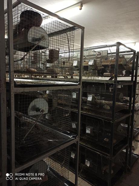 Solidne klatki hodowlane dla szynszyli, królików, przepiórek, gołębi