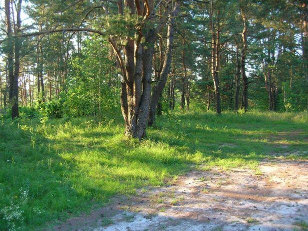 Глеваха-Малютянка. Участок под застройку 10с, 30с в лесу
