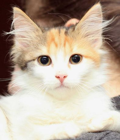 Котенок девочка ищет дом