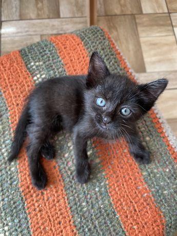 Котята в добрые руки, черненькая девочка и мальчик разноцветный