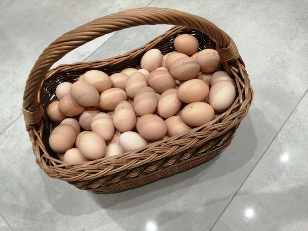 Wiejskie jajka z przydomowej zagrody!
