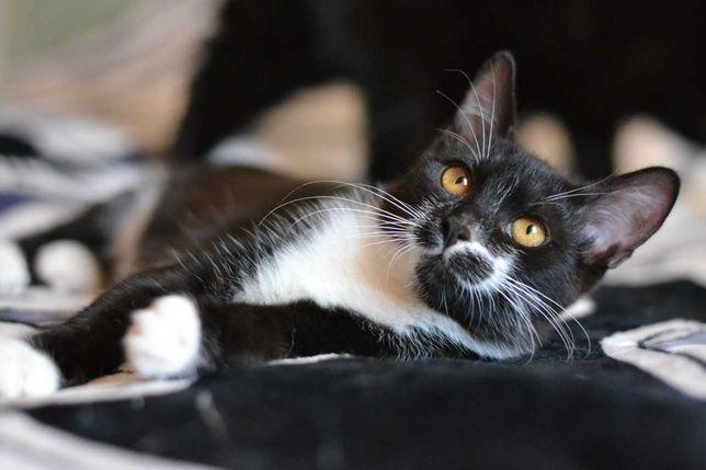 красиве кошенятко в чорно-білій шубці 4м