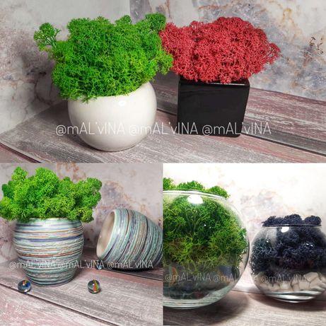 Флораріум • Керамічні кашпо • Стабілізований мох