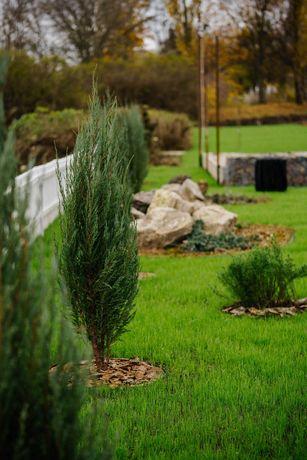 Травосмесь прочная газонная для дачи Выносливый газон семена тень