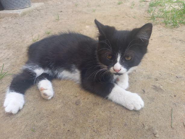 Kotki po długowłosej mamie.