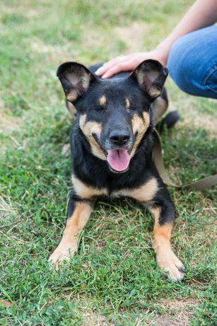 Добрая особенная собачка Люся (1 годик) стерилизована