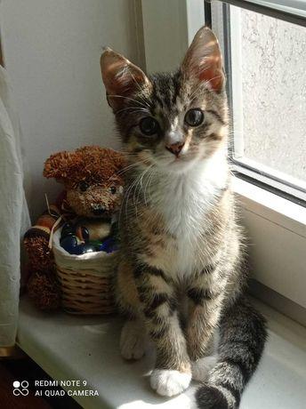 PILNE !!! Nagroda 1000 zł .Zaginął  mały kot .