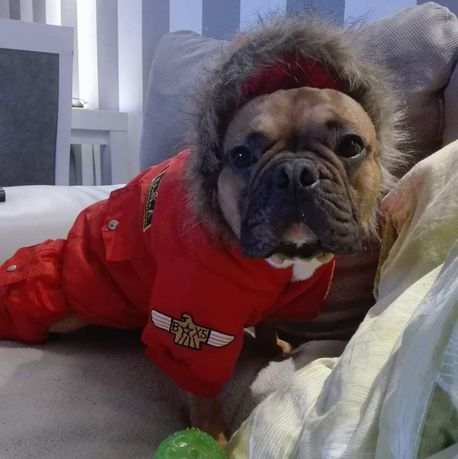 Bluza zimowa kombinezon dla psa ocieplana