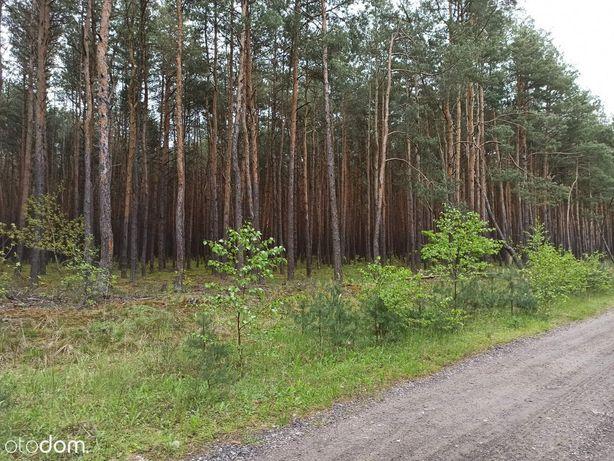Działka leśna pod zabudowę, 45m szerokości