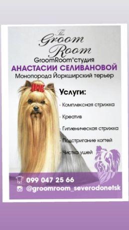 Стрижка Йорков Северодонецк/Груминг собак