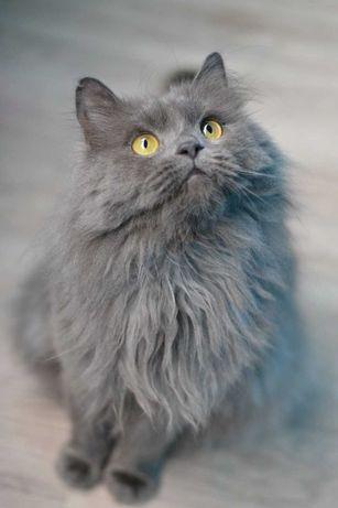 пухнастошубий котичок 1р