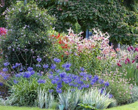 Озеленение, ландшафтный дизайн, подбор растений