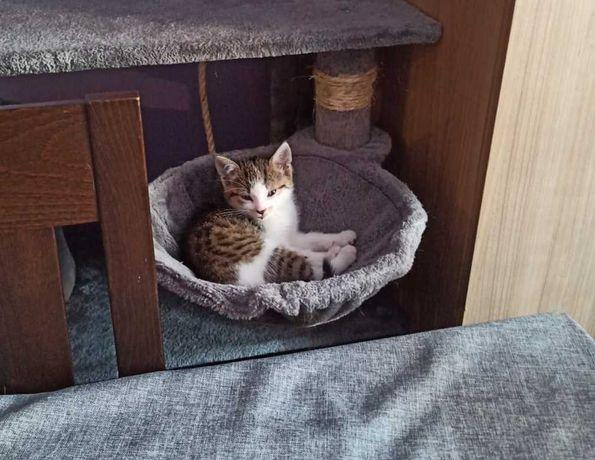 Kot 3 miesiące - wesoły, odważny kociak oddam w dobre ręce